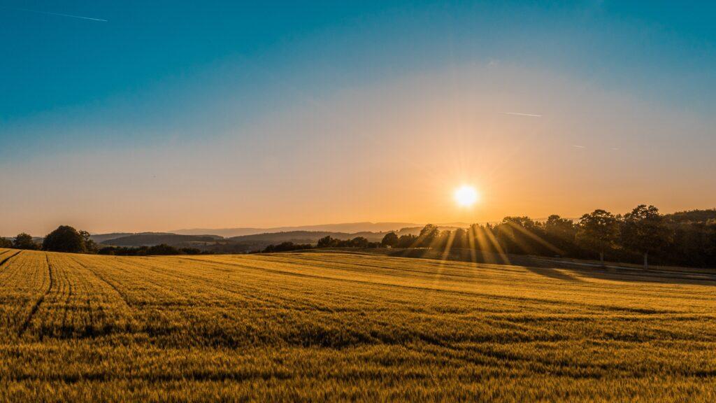 Photo of Farm Land